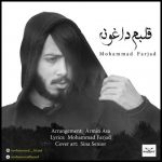 متن اهنگ محمد فرجاد قلبم داغونه
